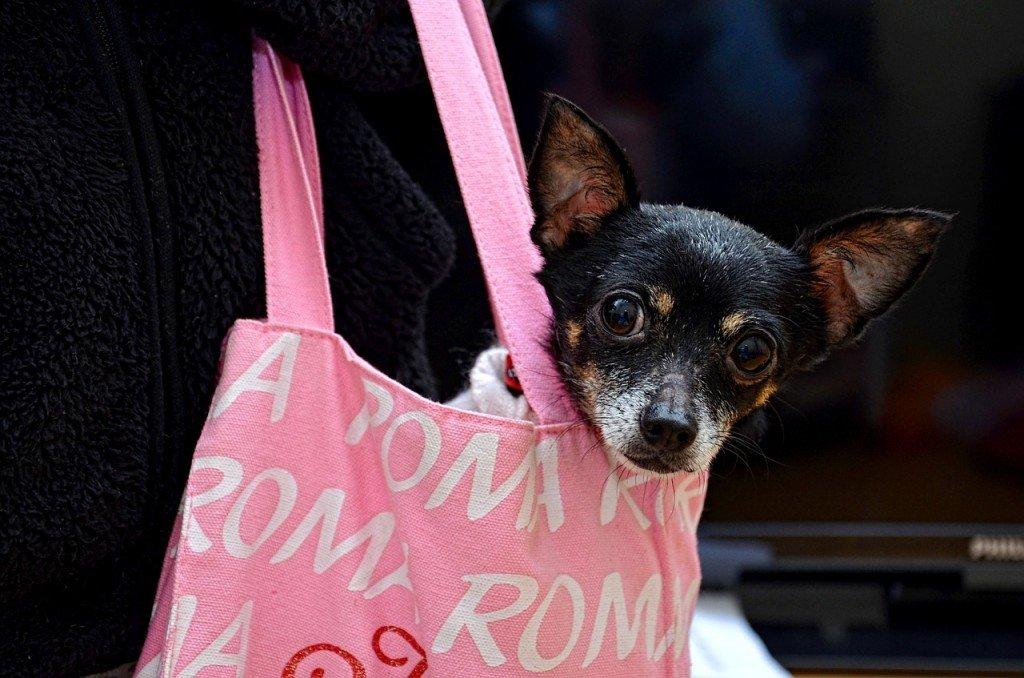 Consejos para viajar con perro en avión