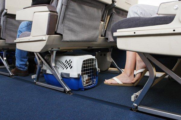 Viajar con perro en cabina avión