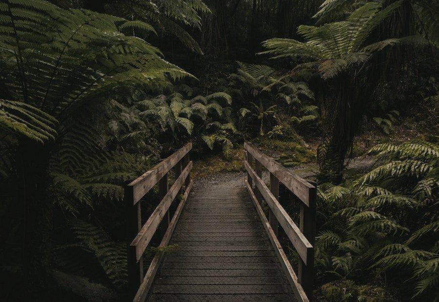 nueva zelanda trekking