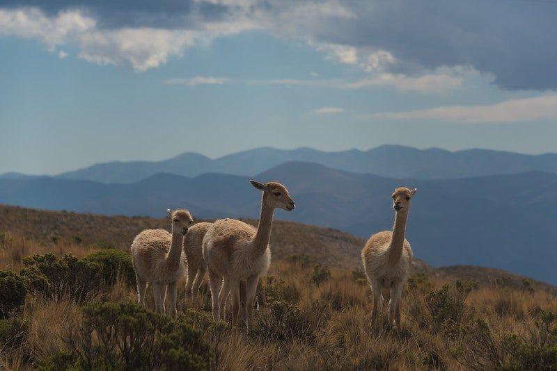 argentina naturaleza