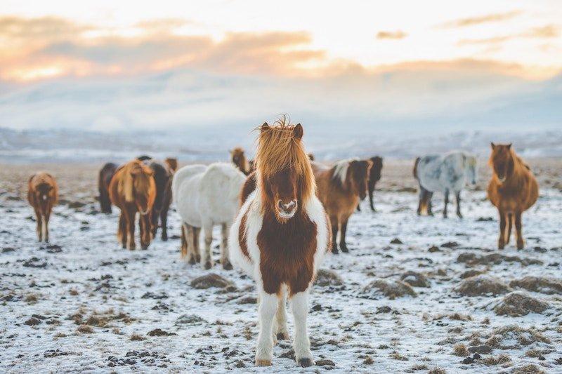 viaje a Islandia por tu cuenta