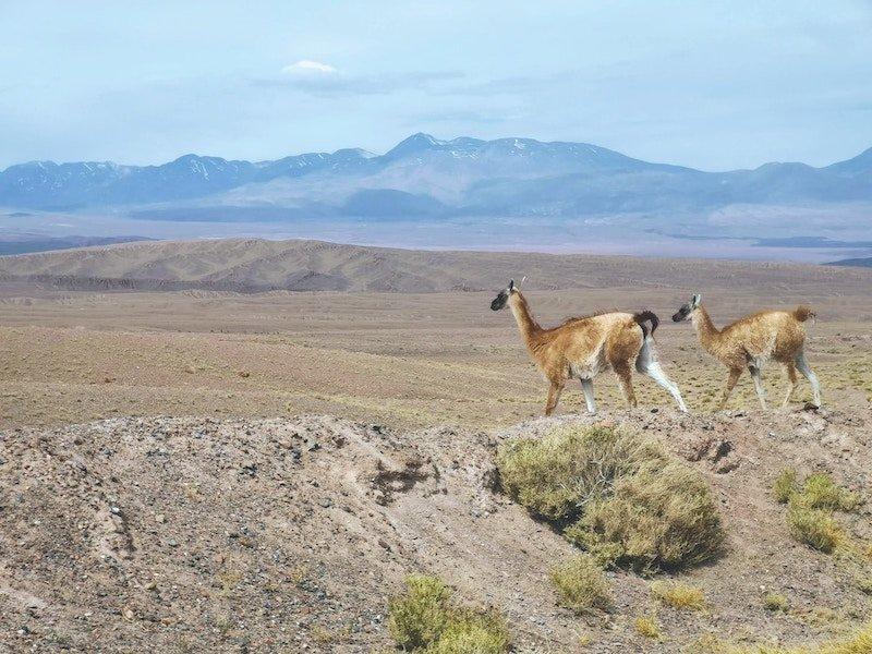 viajar al Desierto de Atacama en Chile