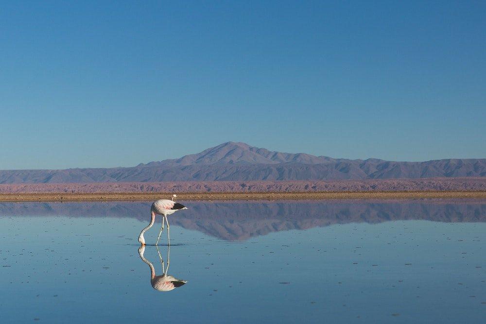 visitar el Desierto Atacama por libre
