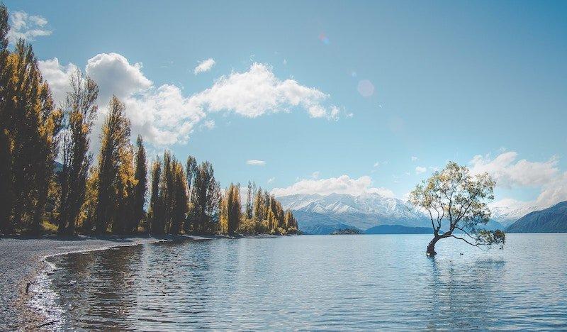 solicitar NZeTA Nueva Zelanda